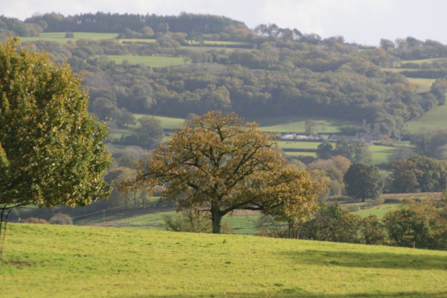View of the Dinefwr estate