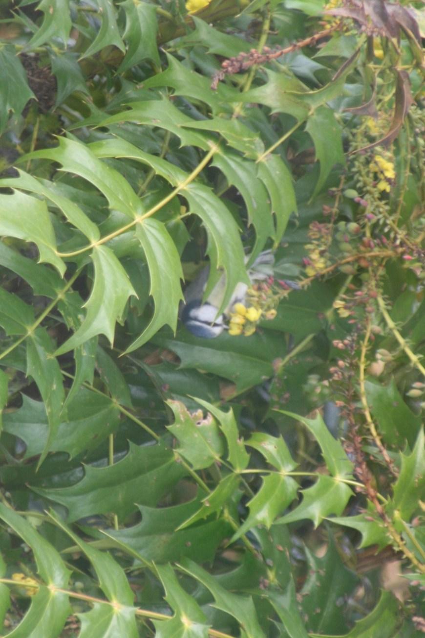 Can you spot the bird enjoying some early pollen yesterday in the garden